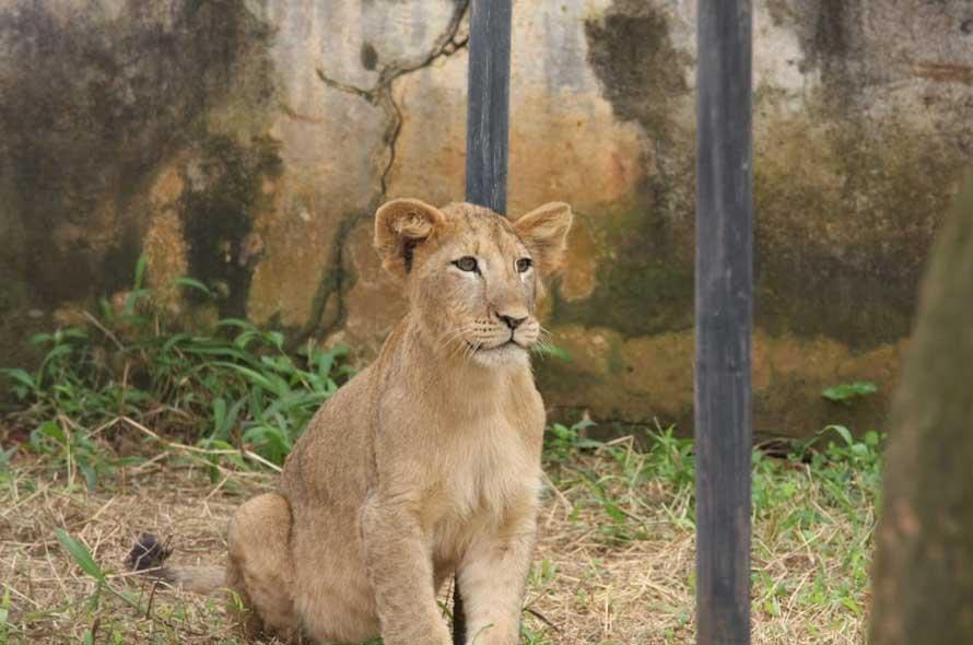 Zoo Mvog-betsi