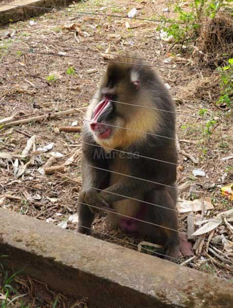 Zoo Mvog-betsi maresa voyage yaounde
