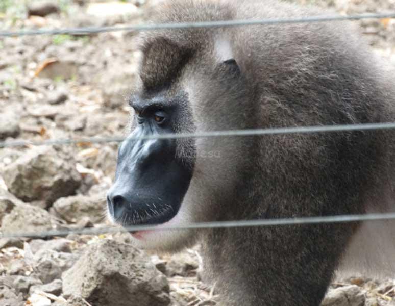 Zoo de Limbé